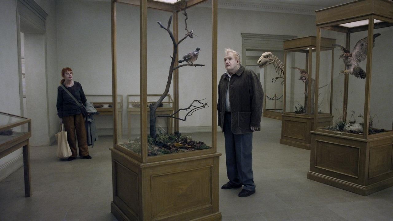 Un piccione seduto su un ramo riflette sull'esistenza 02