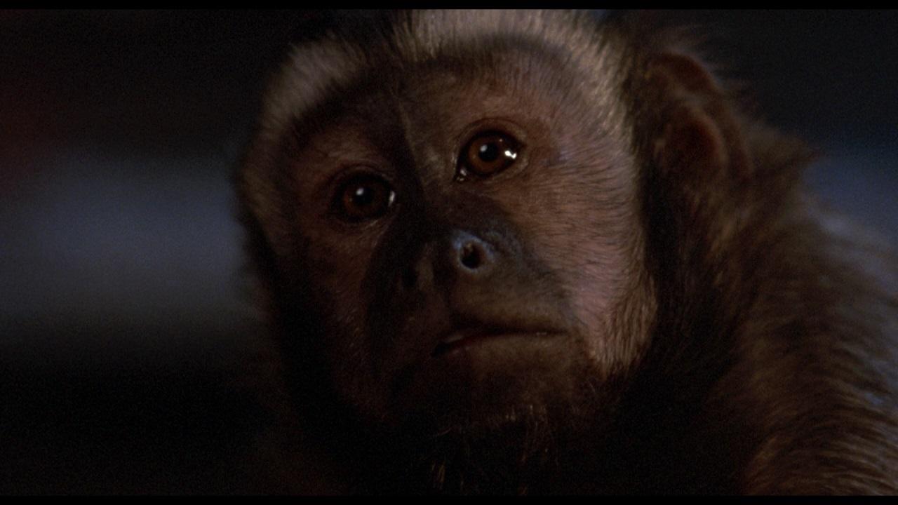 Monkey Shines - 01