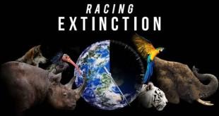 Racing-Extinction-recensione-copertina