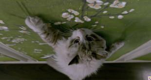 una vita da gatto di barry sonnenfeld recensione