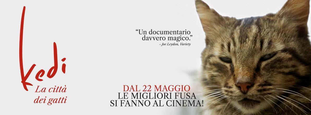 kedi-la-citta-dei-gatti-recensione-film-copertina