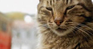kedi-la-citta-dei-gatti-recensione-film-cover