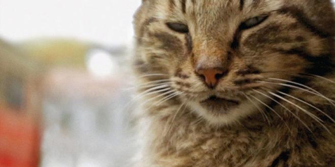 Kedi, la città dei gatti, l'equilibrio di mutua assistenza tra le strade di Istanbul