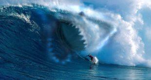 shark copertina