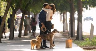 dog-days-recensione-film-01