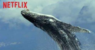 Netflix svela il trailer esteso de Il Nostro Pianeta