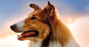 lassie-torna-a-casa-recensione-film